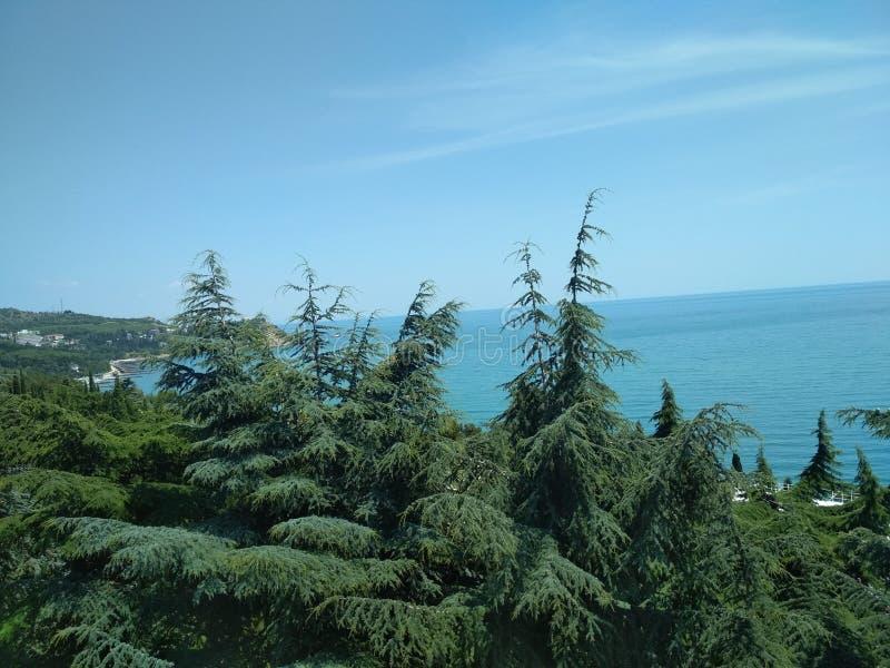 Парк Aivazovsky в Крыме стоковое фото rf