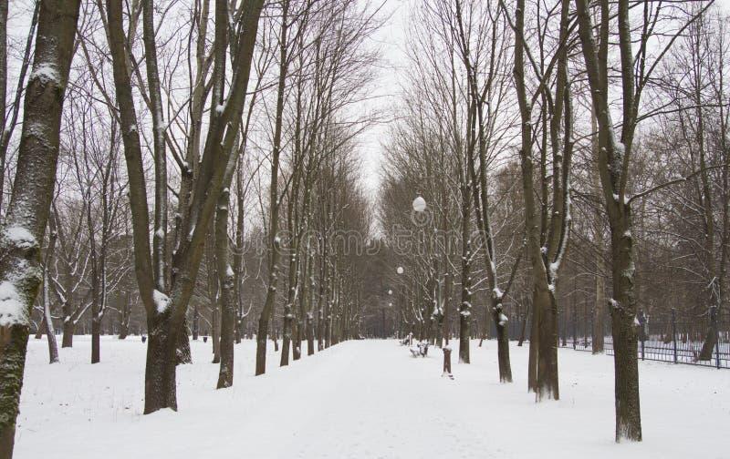 Парк alley2 зимы стоковая фотография
