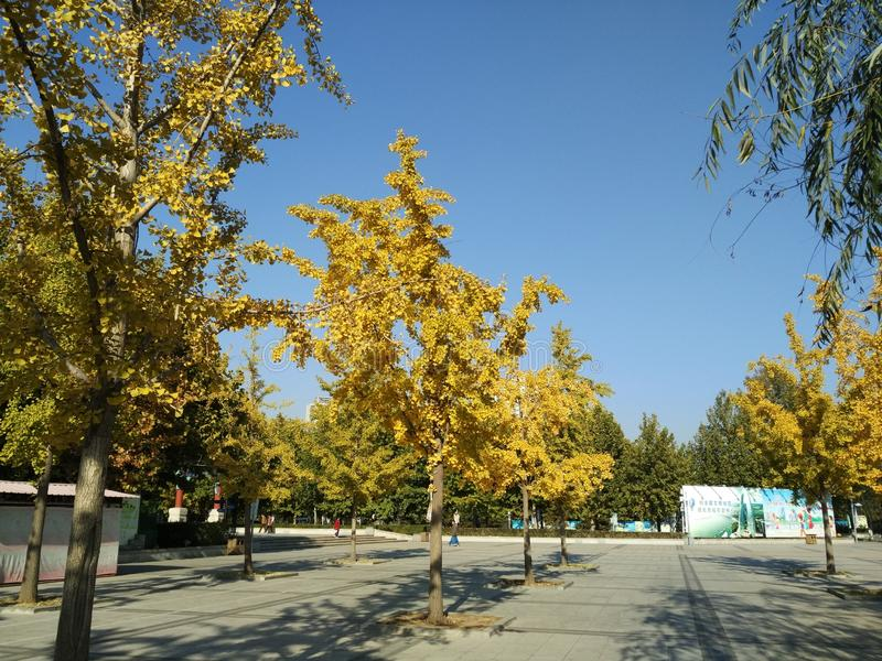 Парк beihai фарфора Пекин стоковое фото rf