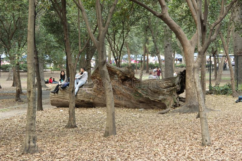 Парк Chapultepec стоковая фотография