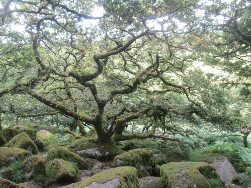 Парк Dartmoor, Англия стоковые изображения rf