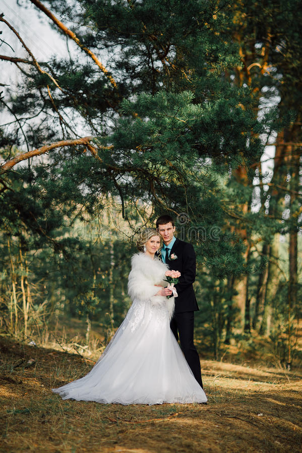 парк groom невесты целуя жених и невеста новобрачных пар на свадьбе в лесе зеленого цвета природы целует портрет фото стоковая фотография rf