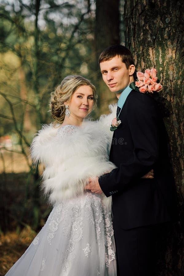 парк groom невесты целуя жених и невеста новобрачных пар на свадьбе в лесе зеленого цвета природы целует портрет фото стоковое изображение rf