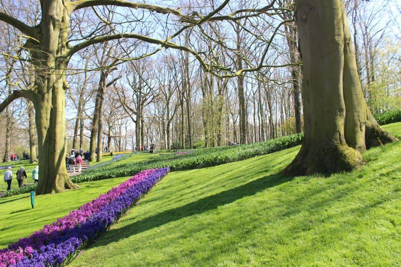 Парк Keukenhof в Нидерландах стоковая фотография rf