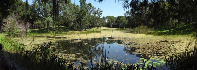 парк lush озера florida стоковые фотографии rf