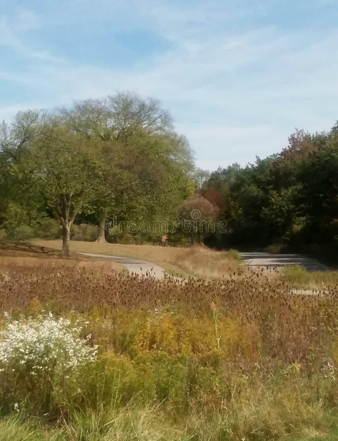 Парк Marshbank стоковое фото