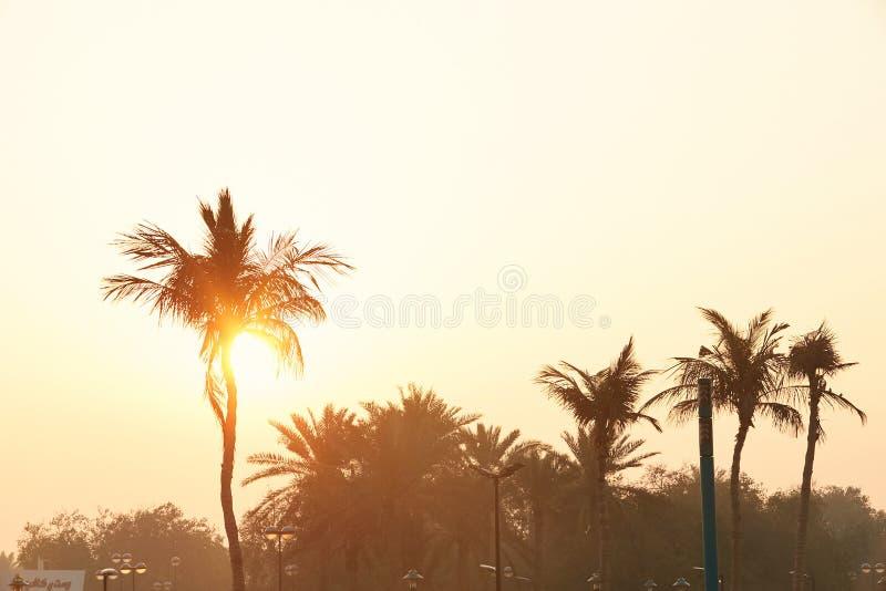 Парк Safa, пляж Jumeirah, Дубай стоковые фото