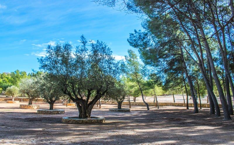 Парк San Vicente одно после полудня с солнечным днем стоковые фотографии rf