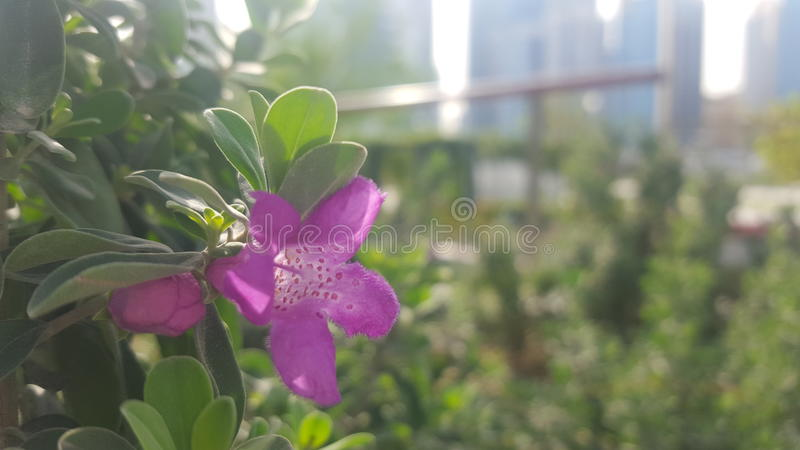 Парк sheraton blossom@ утра стоковые изображения rf