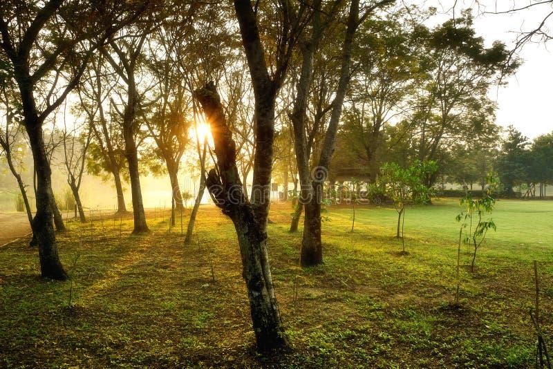 Парк Sri Nakhon Khuean Khan и ботанический сад стоковые фотографии rf