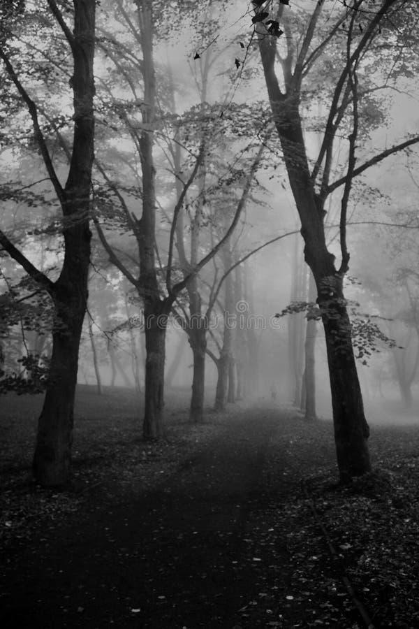 Парк Stettin стоковое изображение rf
