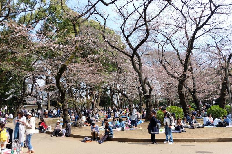 Парк Ueno во время сезона вишневого цвета стоковое фото rf