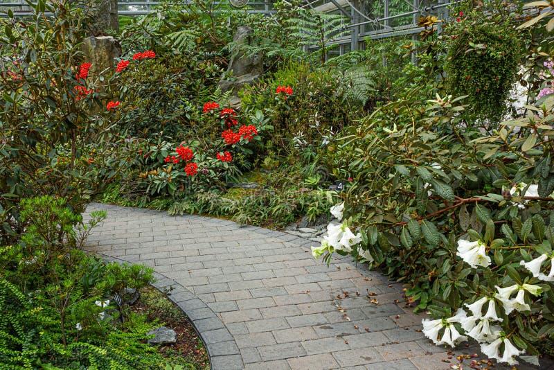 Парник весной с путями и цветками рододендрона стоковое изображение rf
