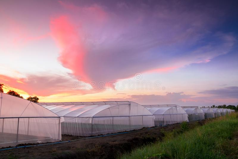 Парник в ферме на заходе солнца стоковое фото