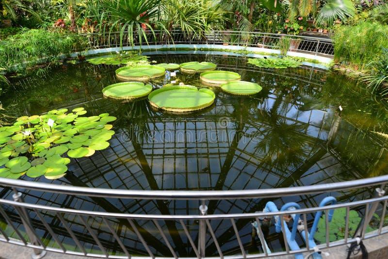 Парник на ботаническом саде от Cluj стоковое изображение