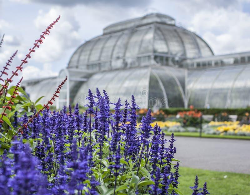 Парник на садах Kew в Лондоне стоковые изображения