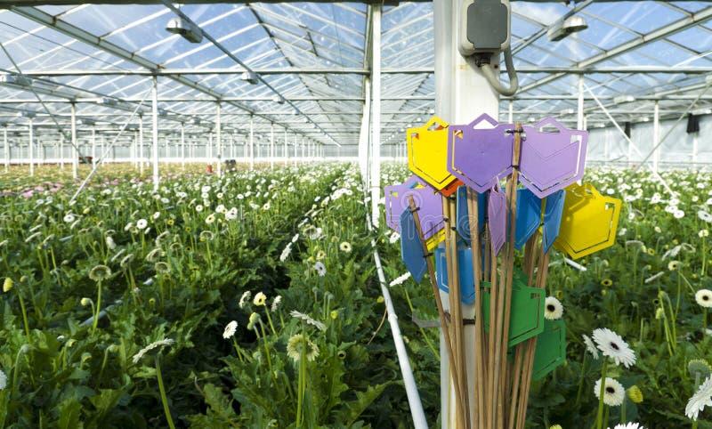 Парник для цветков стоковое фото rf