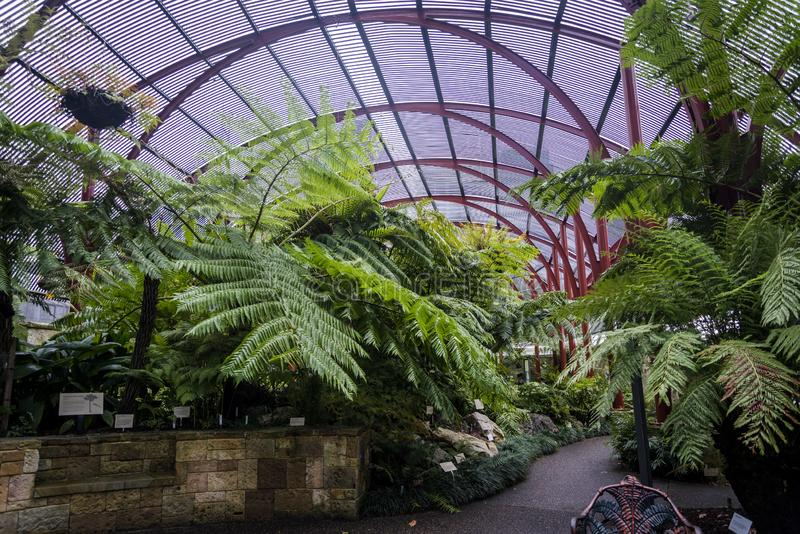 Парник Fernery Сиднея, королевские ботанические сады, Сидней, Австралия стоковые изображения