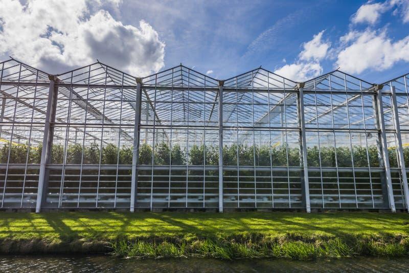 Парник Harmelen томата с облаками стоковое фото