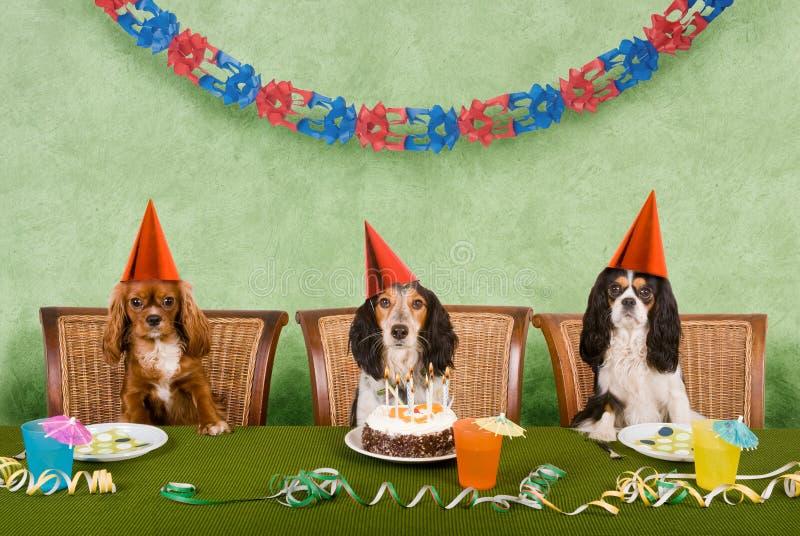 партия собаки стоковое изображение rf