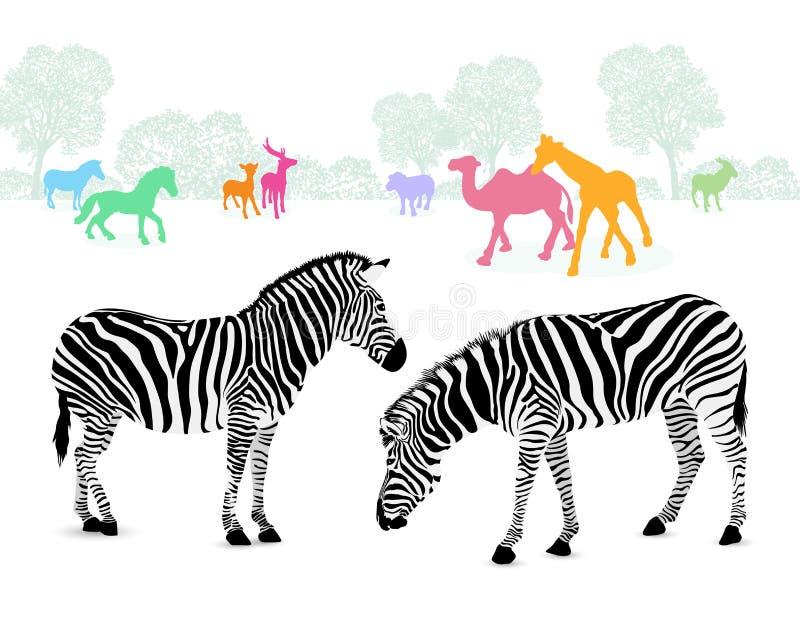Пары зебры с красочными животными силуэта иллюстрация вектора