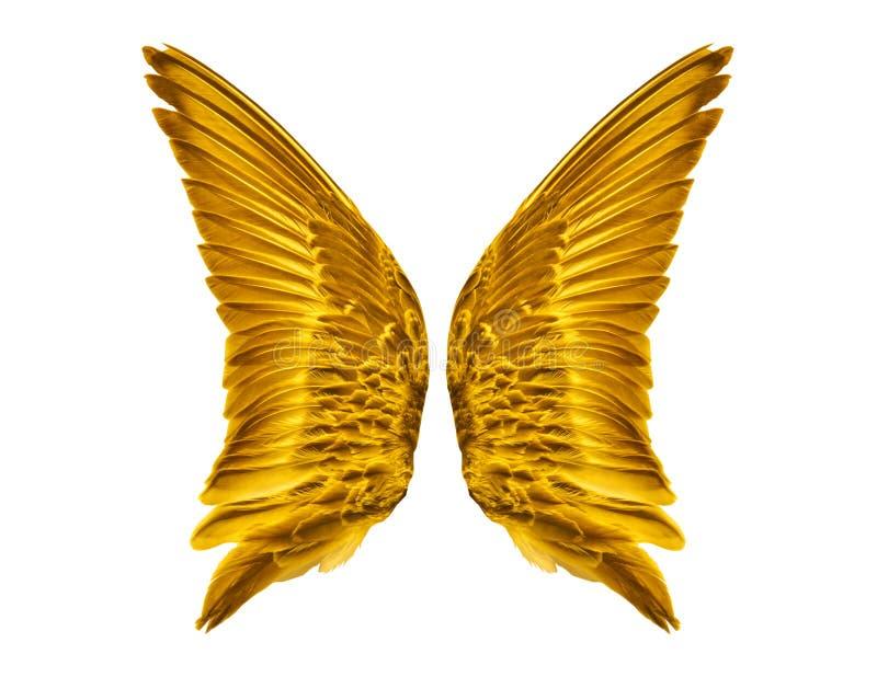 Пары золотых крылов птицы стоковое фото