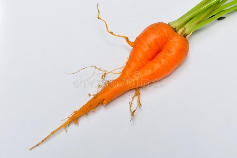 Download Пары зрелых морковей на белой предпосылке Стоковое Фото - изображение насчитывающей здоровье, ферма: 40581930