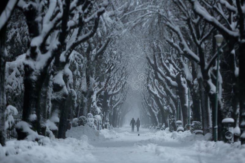 Пары идя в парк, зимнее время стоковые изображения rf