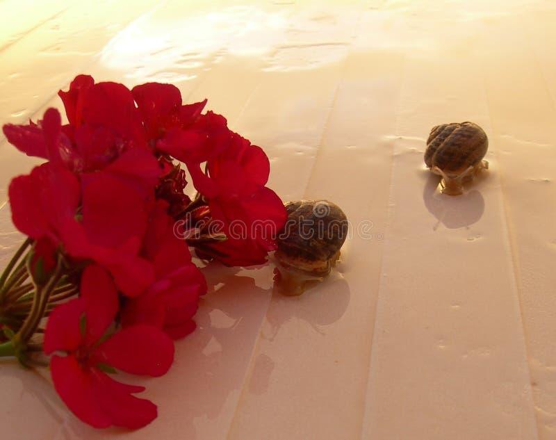 пары любовников улиток с цветками стоковое фото