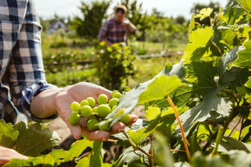 Пары молодого и счастливого фермера на их саде в солнечном дне стоковые фото