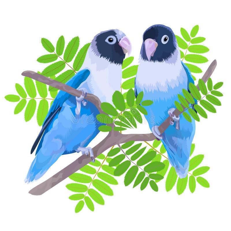 Пары неразлучников замаскированных синью иллюстрация штока