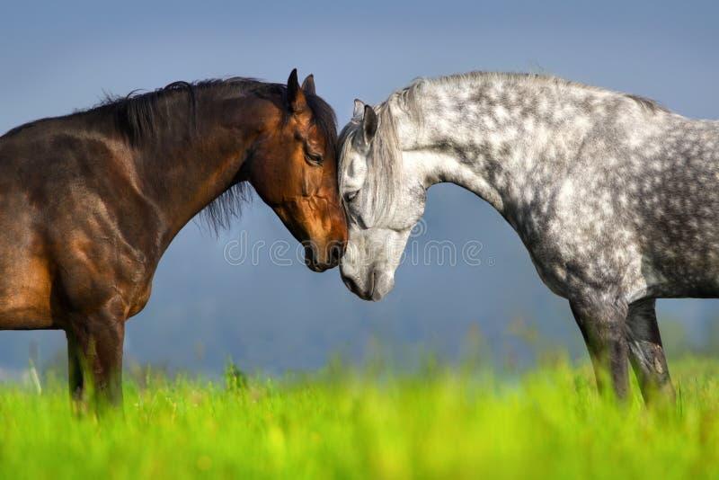 Пары портрета лошади стоковые фотографии rf