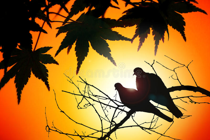 Пары птиц в осени стоковые фотографии rf