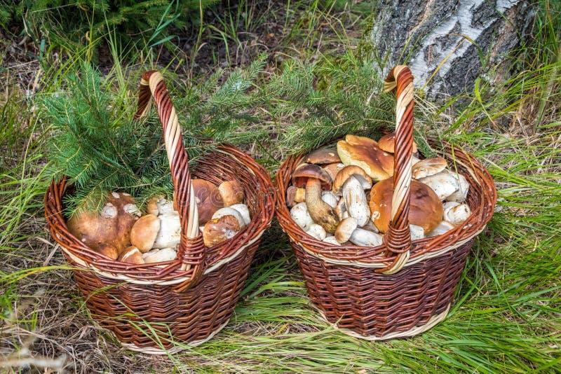 Пары плетеных корзин с грибами стоковые изображения rf