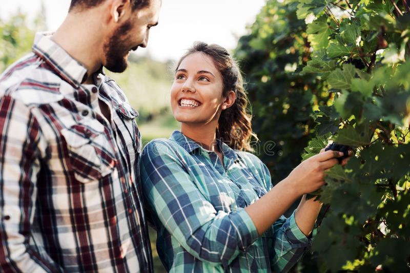 Пары работая в винограднике стоковое изображение rf