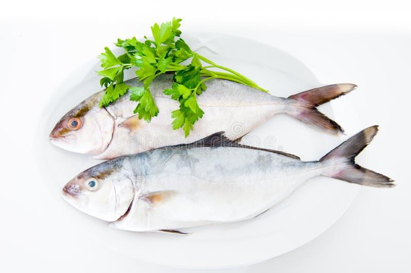 Пары рыб amberjack свежих на белой плите стоковое изображение