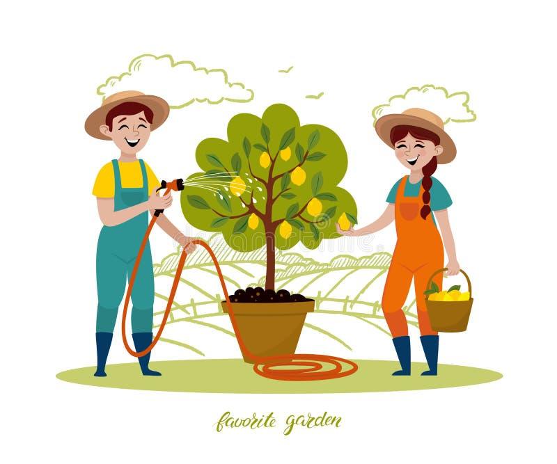 Пары садовников работают в саде Человек с деревом моча лимона шланга сада, женщина комплектуя плоды в корзине иллюстрация вектора