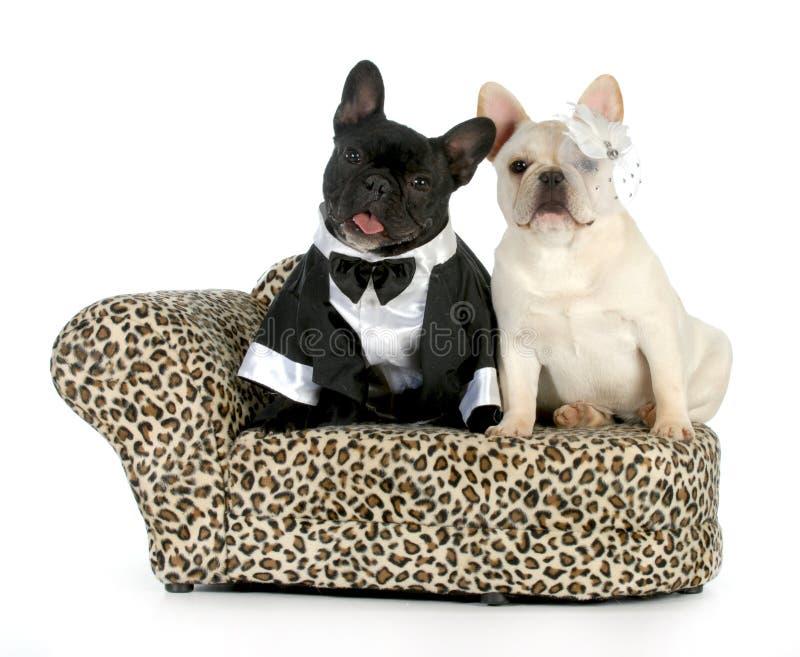 Пары собаки стоковые фото