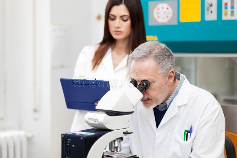 Пары ученого исследуя в лаборатории стоковое изображение rf