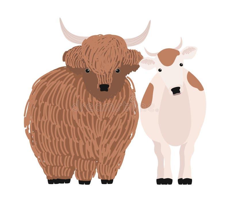 Пары яков и коровы изолированных на белой предпосылке Портрет пар стоять животных скотин милого шаржа отечественный иллюстрация штока