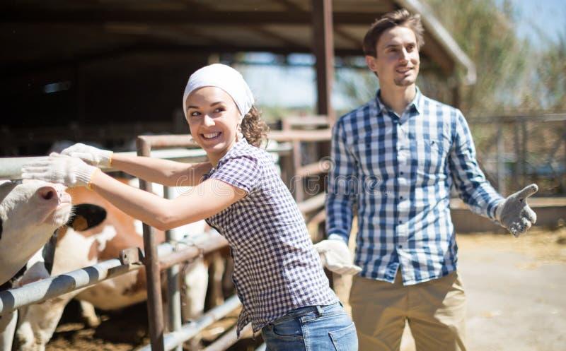 Пары warkers фермы представляя на коровнике стоковое изображение
