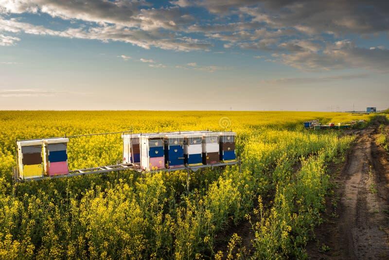 Пасека в поле стоковые фотографии rf