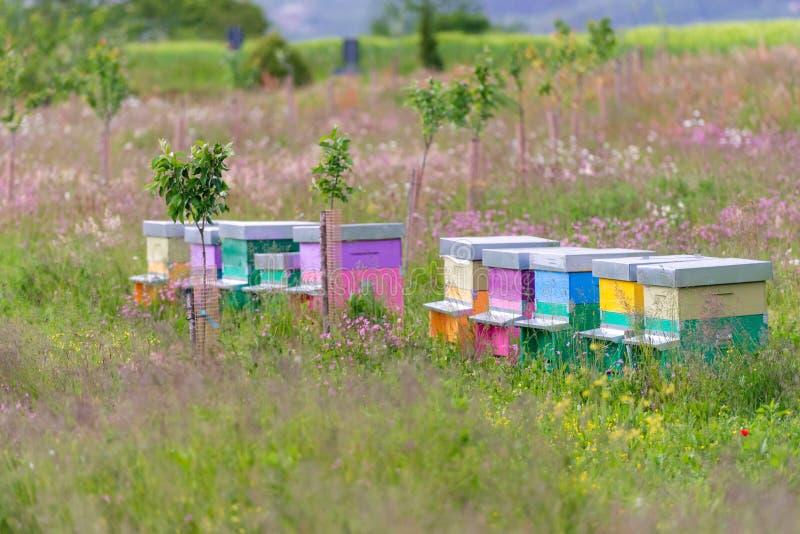Пасека на зацветая поле стоковое изображение