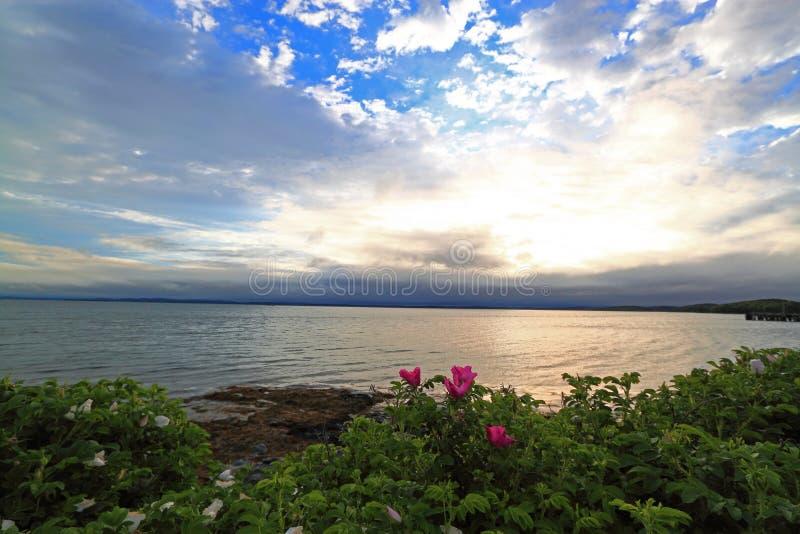 Пасмурная береговая линия рассвета стоковые изображения rf