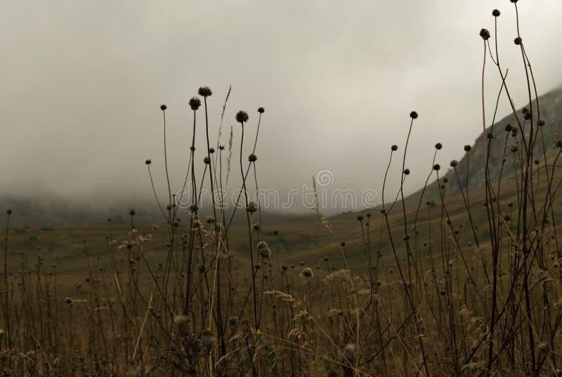 Пасмурная долина в горах стоковая фотография rf