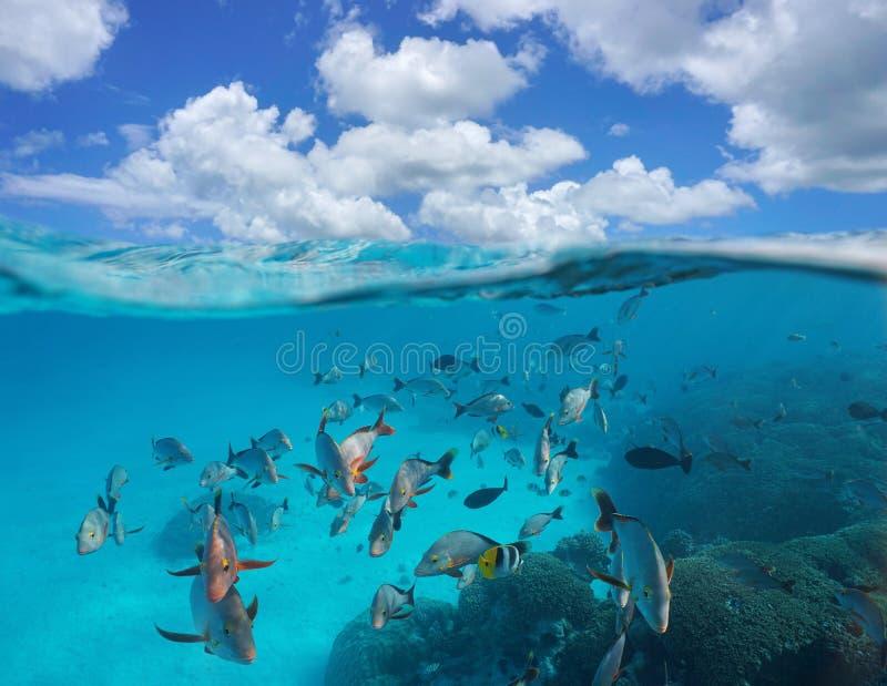 Пасмурное мелководье голубого неба тропических рыб подводных стоковое изображение rf