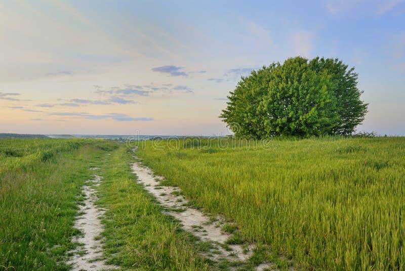 пасмурное небо дороги поля стоковое фото