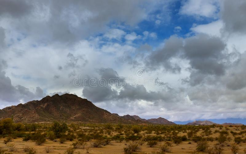пасмурный кактус ландшафта пустыни на горе стоковое фото