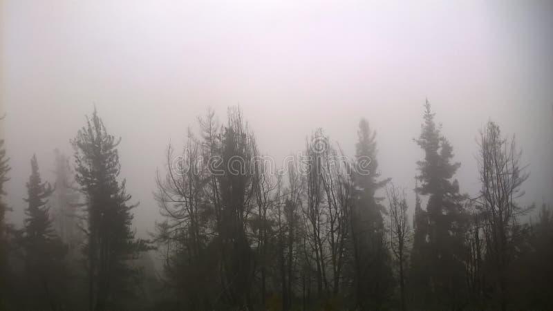 Пасмурный лес в mountanins стоковое изображение