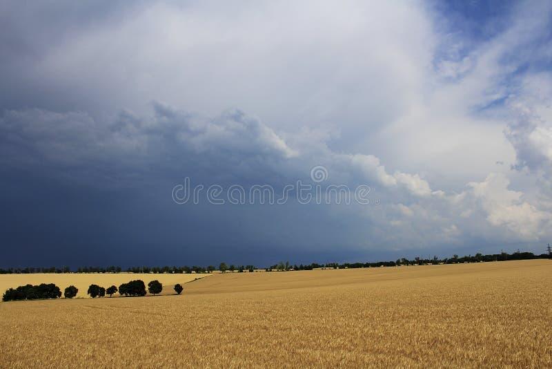 Пасмурный над полем стоковая фотография rf